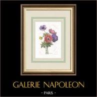 Flores de jardín - Anemone
