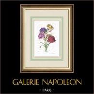 Garden Flowers - Carnations