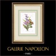 Flores de jardín - Crocus - Jacinto - Primavera