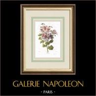 Flores de jardín - Geranio