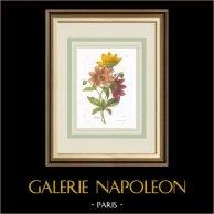 Flores de jardín - Dalia
