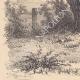 DÉTAILS 07 | Paysage de Lorraine - Etude d'arbres - Un saule mort (France)