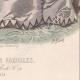 DÉTAILS 08 | Gravure de Mode - Paris - Musée des Familles - Novembre 1867