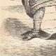 DÉTAILS 07 | Osage - Costume - Amérindien - Missouri - Oklahoma (États-Unis d'Amérique)