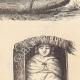 DÉTAILS 05 | Amérindiens - Indiens d'Amérique - Canots et Berceaux (États-Unis d'Amérique)
