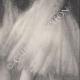 DÉTAILS 06 | Ballet - Danseuses - Danseuses Vertes (Edgas Degas)