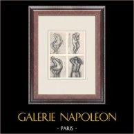 Female Nude - Quatre Etudes (Edgar Degas)