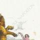 DÉTAILS 03 | Fables de La Fontaine - Le Lion et le Rat