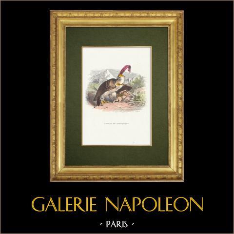 Favole di La Fontaine - L'Aigle et l'Escargot | Incisione xilografica originale disegnata da J.J. Grandville. Acquerellata a mano. 1859