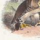DÉTAILS 02   Fables de La Fontaine - L'Aigle et l'Escargot