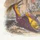 DÉTAILS 02   Fables de La Fontaine - L'Oiseau Blessé d'une Flèche