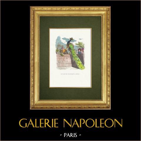 Favole di La Fontaine - Le Paon se Plaignant à Junon | Incisione xilografica originale disegnata da J.J. Grandville. Acquerellata a mano. 1859