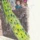 DÉTAILS 04 | Fables de La Fontaine - Le Paon se Plaignant à Junon