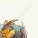 DÉTAILS 03 | Fables de La Fontaine - Le Lion et l'Ane Chassant
