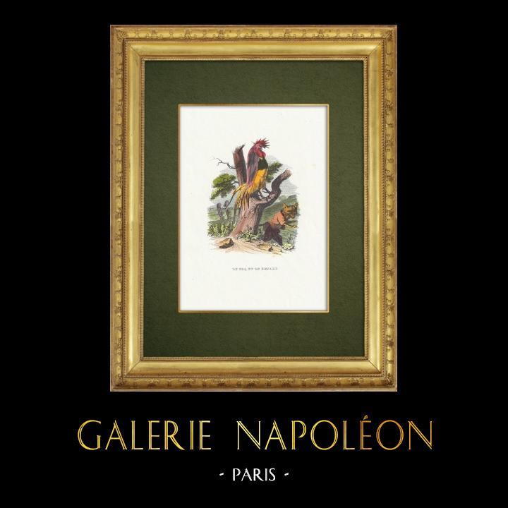 Gravures Anciennes & Dessins | Fables de La Fontaine - Le Coq et le Renard | Gravure sur bois | 1859