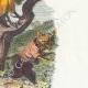 DÉTAILS 04 | Fables de La Fontaine - Le Coq et le Renard