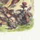DÉTAILS 04 | Fables de La Fontaine - Le Combat des Rats et des Belettes