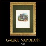 Fables of La Fontaine - Philomèle et Progné
