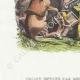 DÉTAILS 02 | Fables de La Fontaine - Tribut Envoyé par les Animaux à Alexandre
