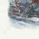 DÉTAILS 02   Fables de La Fontaine - Le Singe et le Dauphin