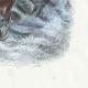 DÉTAILS 04   Fables de La Fontaine - Le Singe et le Dauphin
