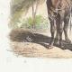 DÉTAILS 02 | Fables de La Fontaine - Le Chameau et les Batons Flottants