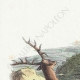 DÉTAILS 01 | Fables de La Fontaine - Le Cheval s'étant Voulu Venger du Cerf