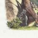 DÉTAILS 02 | Fables de La Fontaine - Le Cheval s'étant Voulu Venger du Cerf