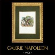 Fables de La Fontaine - Le Cerf et la Vigne