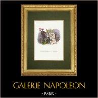 Fables of La Fontaine - Le Mulet se Vantant de sa Généalogie