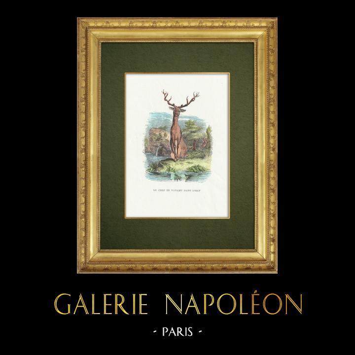 Gravures Anciennes & Dessins | Fables de La Fontaine - Le Cerf se Voyant dans l'Eau | Gravure sur bois | 1859