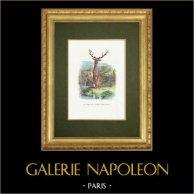 Fabler av La Fontaine - Le Cerf se Voyant dans l'Eau