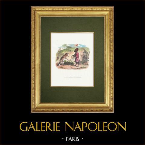 Favole di La Fontaine - Le Lion Malade et le Renard | Incisione xilografica originale disegnata da J.J. Grandville. Acquerellata a mano. 1859