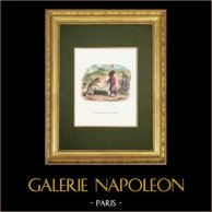 La Fontaines Fabeln - Le Lion Malade et le Renard