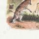 DÉTAILS 02 | Fables de La Fontaine - Le Lion Malade et le Renard