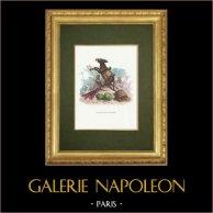Fables of La Fontaine - L'Ane et ses Maitres
