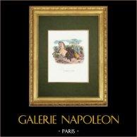 Fables de La Fontaine - Le Cheval et l'Ane