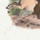 DÉTAILS 02   Fables de La Fontaine - Le Cheval et l'Ane