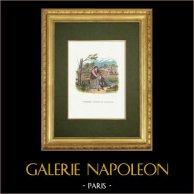 Fables of La Fontaine - L'Oiseleur, l'autour et l'Alouette