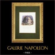 Fables of La Fontaine - L'Homme qui Court après la Fortune