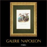Fables of La Fontaine - Les Vautours et les Pigeons
