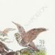 DÉTAILS 03   Fables de La Fontaine - Les Vautours et les Pigeons