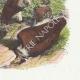 DÉTAILS 04   Fables de La Fontaine - Les Vautours et les Pigeons