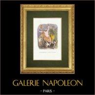 Fables of La Fontaine - Le Statuaire et la Statue de Jupiter