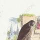 DÉTAILS 01   Fables de La Fontaine - Le Faucon et le Chapon