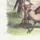 DÉTAILS 02   Fables de La Fontaine - Le Faucon et le Chapon