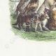 DÉTAILS 02   Fables de La Fontaine - Les Loups et les Brebis