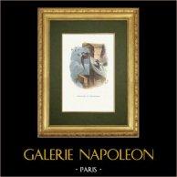 Fables of La Fontaine - L'Araignée et l'Hirondelle