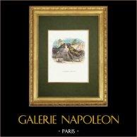 Fabler av La Fontaine - La Perdrix et les Coqs