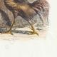 DÉTAILS 04 | Fables de La Fontaine - La Perdrix et les Coqs